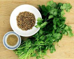 coriander-oil.jpg