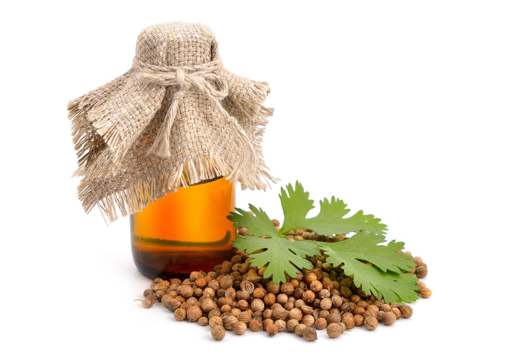 coriander oil beauty benefits. meet the best hair oils